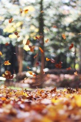 autumn-mott-15013